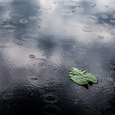 A high angle closeup shot of an isolated green leaf in a puddle on a rainy day